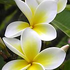 Frangipani Delight by Michelle Larrea