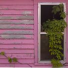 Window, Pigeon Forge, Tennessee by fauselr