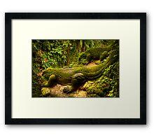 Komodo Dragons - Ubud, Bali Framed Print