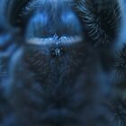 Chilean Rose spider - Abstract Blue by stellaozza