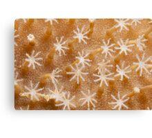 Ribbon Reefs - Coral Polyps Canvas Print