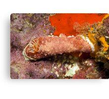 Ribbon Reefs - Nudibranch Canvas Print