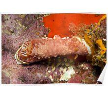 Ribbon Reefs - Nudibranch Poster