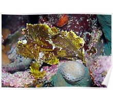 Ribbon Reefs - Green Leaf Scorpion Fish Poster