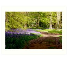 A Walk in Bluebell Wood- Thorpe Perrow (Spring) Art Print