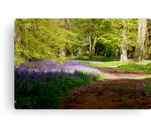 A Walk in Bluebell Wood- Thorpe Perrow (Spring) Canvas Print