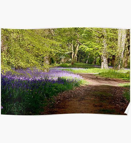 A Walk in Bluebell Wood- Thorpe Perrow (Spring) Poster