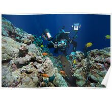 Osprey Reef - Underwater Photographer Poster