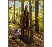 Racoon in Woods Photographic Print