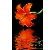 Lilie Reflections Photographic Print