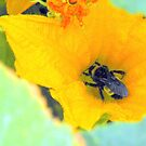 Bumble Bee series.... by Sheila  Pasket