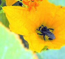 Bumble Bee series.... by wahumom
