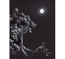 Night Creatures Photographic Print