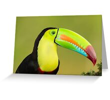 Portrait of Colours (Keel-billed Toucan) Greeting Card