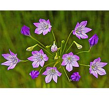 Ithuriel's Spear Photographic Print