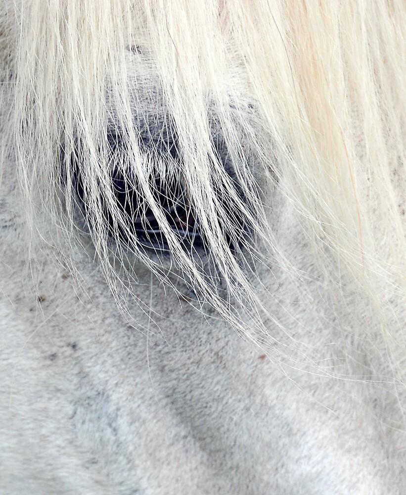 Equine eye by rosie320d