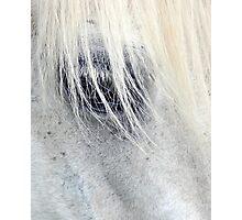Equine eye Photographic Print