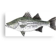 White Bass Canvas Print