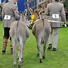 Peebles Show Donkeys by rosie320d