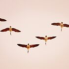Geese Flying In 'V' Formation by Laurie Minor