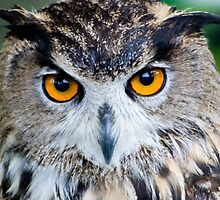 Eagle Owl - Euroasian by ©FoxfireGallery / FloorOne Photography
