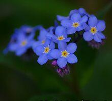 Blue Wildflowers by BLaskowsky