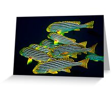 ORIENTAL SWEETLIPS - MALDIVES Greeting Card