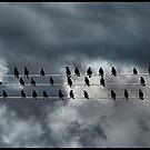 birds on a wire by Devon Mallison