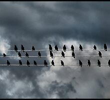 birds on a wire by Devon Mallison