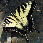Swallowtail by Catherine  Howell