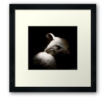 Noises in the roof ? Framed Print