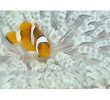 Nemo Bleached Photographic Print