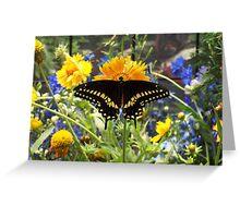 Peek-A-Boo Butterfly Greeting Card