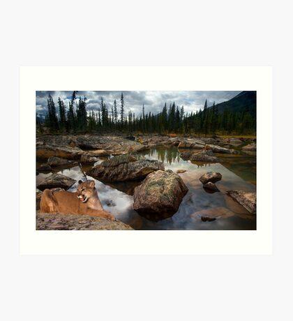 973-Cougar Waters Art Print