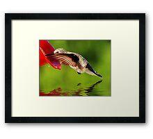 Caught In The Nectar Framed Print