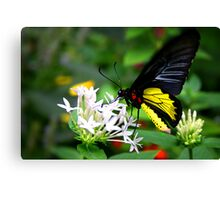 Flying Butterfly Canvas Print