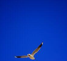 Free as a bird by Of Land & Ocean - Samantha Goode