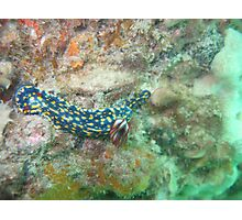 Another Nudi at Straddie Photographic Print