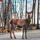 High heals on the Highway - Oh Deer by Poete100