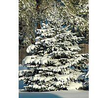 Winter Trees - 1 Photographic Print