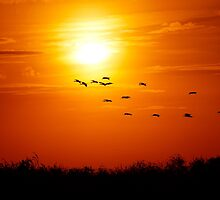 Everglades Sunset with Flock of Birds by jrhall19