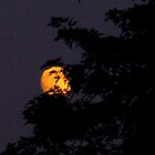 Oh Harvest Moon, stay a little longer? by MarianBendeth