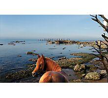 974B-New Jersey Shoreline Photographic Print