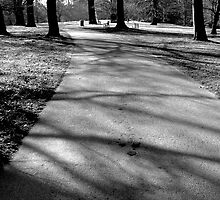 Trees and shadows by Jo Byrne