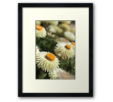 Paper daisies kind of day  Framed Print
