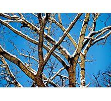 A Crisp Winter Day Photographic Print