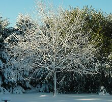 Winter Trees - 2 by Paul Gitto
