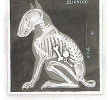 X IS FOR XRAY From A Bull Terrier's Alphabet. by threebrownhares