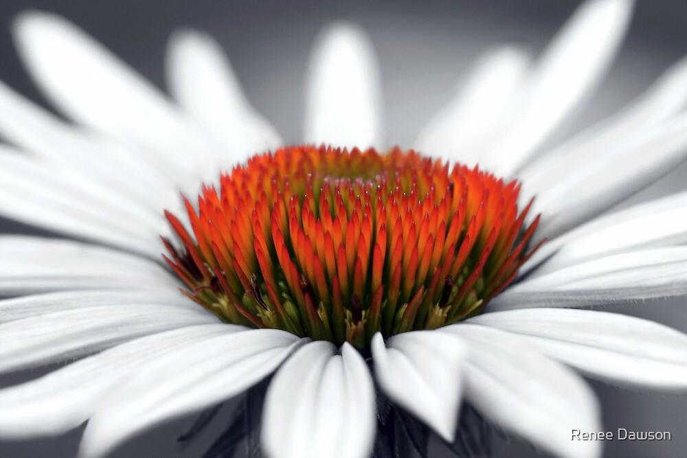 Echinacea Heart by Renee Dawson