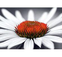 Echinacea Heart Photographic Print